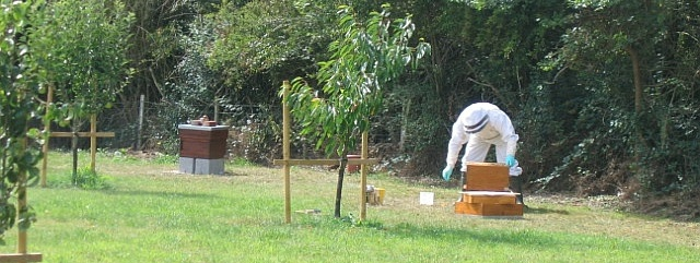 Ready Assembled Beehives
